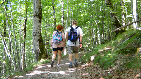 Couple Hiking In Dense Woods 영상물