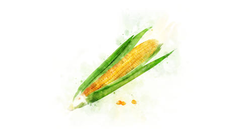 Corn watercolor drawing animation Animation