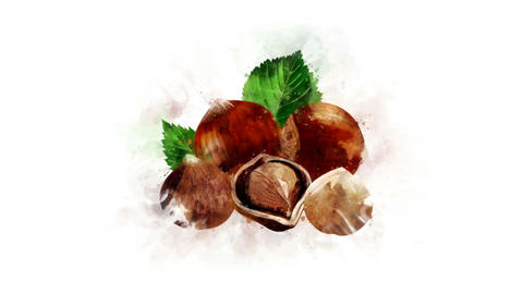 Hazelnut animated illustration Animation