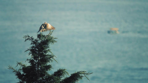 Bird flying off the top of the tree against marine scenery, slow motion shot Filmmaterial
