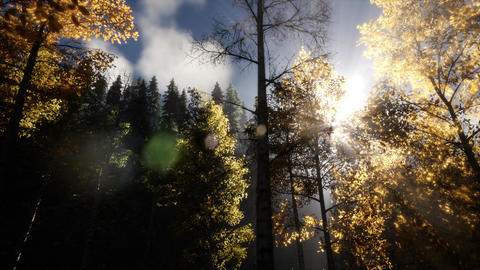 Sun Shining Through Pine Trees in Mountain Forest Footage