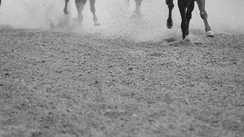Legs of Horses Galloping. Slow Motion GIF