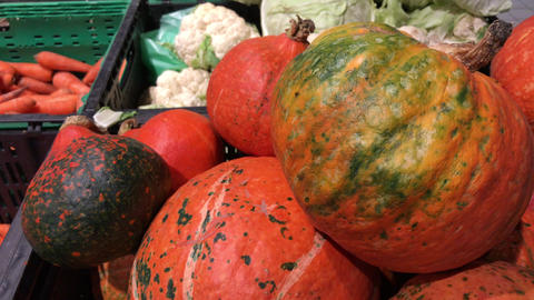 4k footage of a different sized orange pumpkins in the market. Autumn or fall Footage