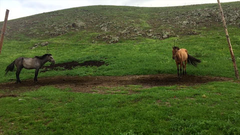 Mongolian Horse 5 Live Action