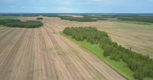 landscape with harvested fields and forests up to horizon Footage