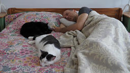 Man and two cats are sleeping. Afternoon nap Footage