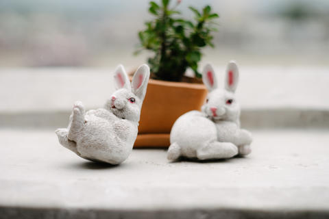Rabbit statue with plant pot フォト