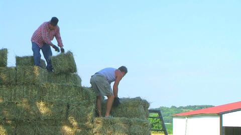Farmers Loading Hay Stock Video Footage