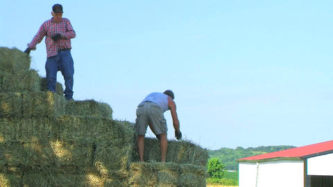 Farmers Loading Hay Footage