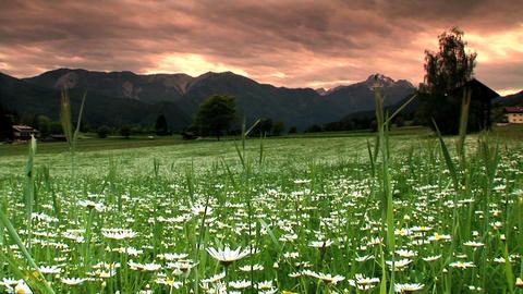 00010 Natur Blumen1 Stock Video Footage