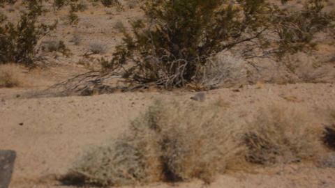 DesertFloor2 Stock Video Footage