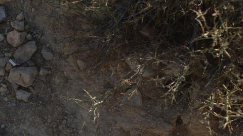 DesertFloor4 Stock Video Footage