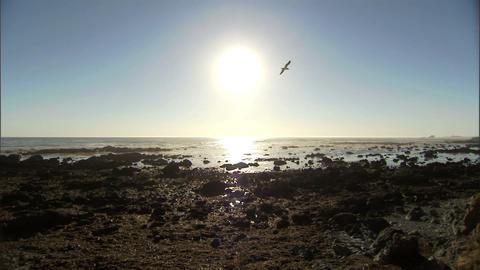 Ocean Seagulls 1 Stock Video Footage