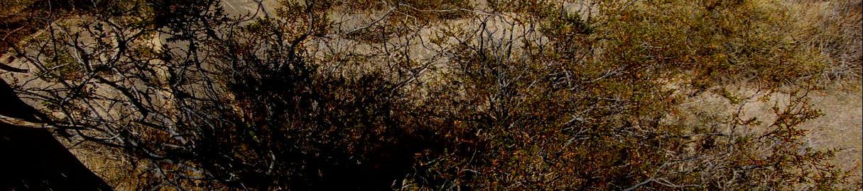 Joshua Tree Footage