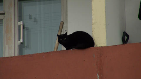 The cat on the balcony Stock Video Footage