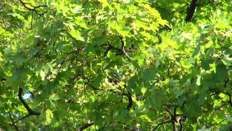 Green vegetation Stock Video Footage