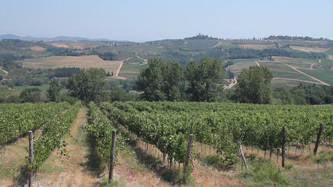 Tuscan countryside and vines of Chianti Footage