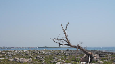 Rocky island and old trunk Stock Video Footage