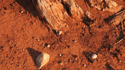 Detail of a tree trunk and red clay earth Stock Video Footage