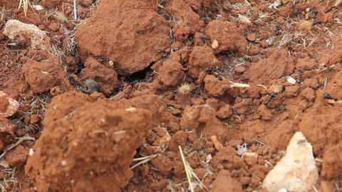 Anthill entrance with working ants Stock Video Footage