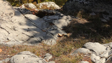 Chipmunk eating slice of bread Stock Video Footage