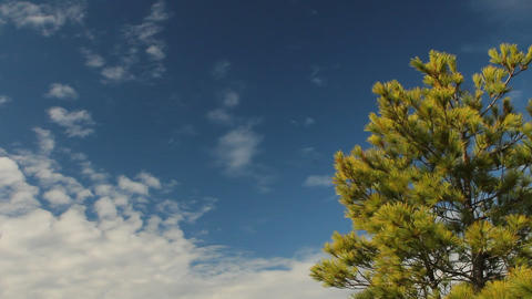 Pine tree with view of Georgian Bay Stock Video Footage
