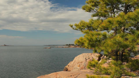 Pine Tree With View Of Georgian Bay stock footage