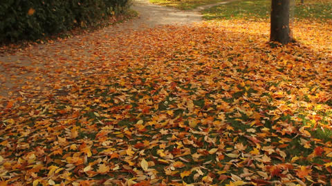 Fallen yellow leaves Stock Video Footage