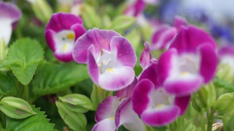 flower Stock Video Footage