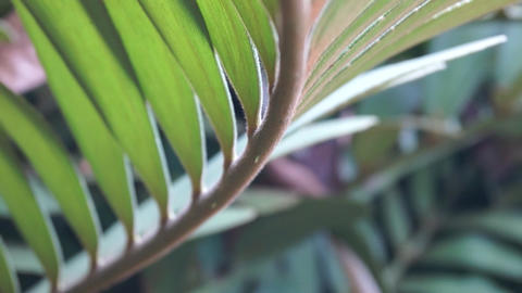 leaf Live Action