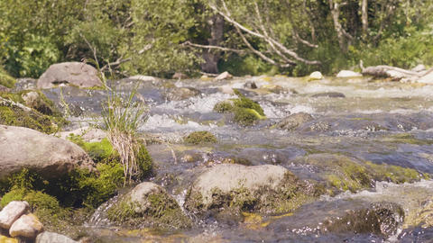 Stony river stream in mountain forest. Water stream quickly flowing close up Live Action