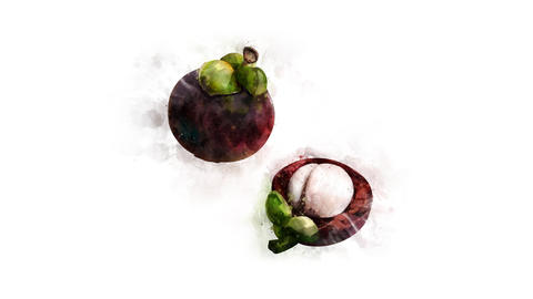 Mangosteen illustration animation Animation