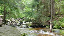 Stream of water in the wild forest. UNESCO biosphere reserve Live Action