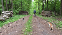 Man and his two cats on walk in a forest Footage