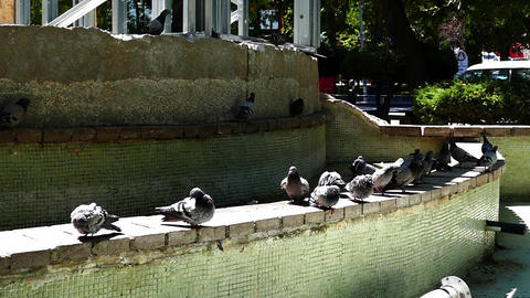 pigeons drinking in the park, slow motion shooting Live Action