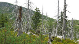 Dead trees. Co2 and So2 emission. Air pollution Live Action