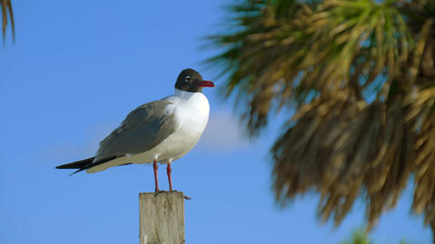 Close up shot of seagull resting on a harbour pole Archivo
