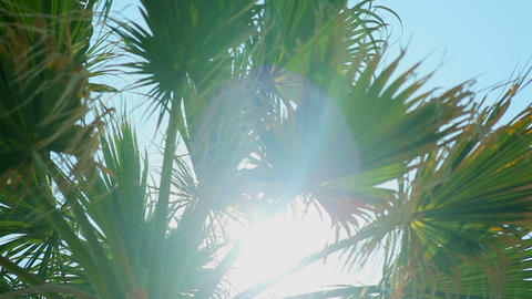 Sun rays in the leaves of a palm tree against the blue sky Live Action