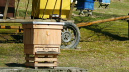 Bees flying into beehive. Bee garden Live Action