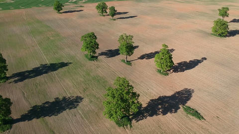 Spring fields and old oaks group, spring farmland landscape, aerial Live Action