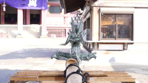 water dragon ビデオ