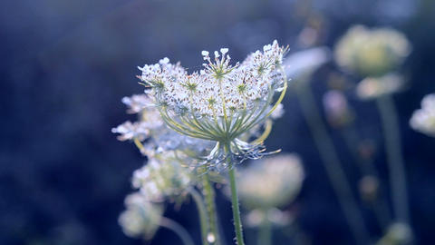 Lovely charming gorgeous and magically beautiful Inflorescence Footage