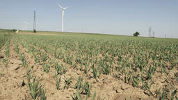 Small wheat and wind turbines Footage
