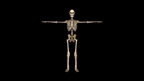 Skeleton 動画素材, ムービー映像素材