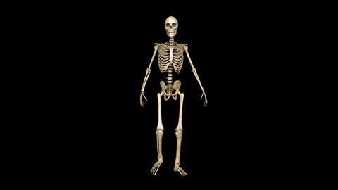 Skeleton Walk Animation