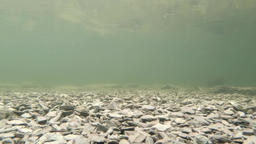 Underwater recording of lake in Wales Archivo