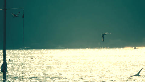 Slow motion shot of seagulls flying at sea GIF