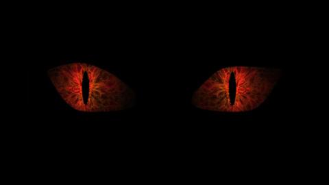 Orange cat eyes blinking Loop CG動画素材