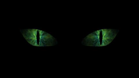 Green cat eyes blinking loop Animation