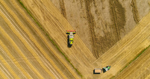 Combine harvester gathers the wheat crop Footage